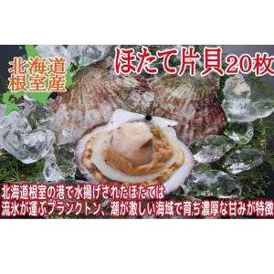 訳あり  片貝ほたて 20枚 (北海道産 根室産 ほたて 帆立 ホタテ BBQ)|nemurokanisen|02