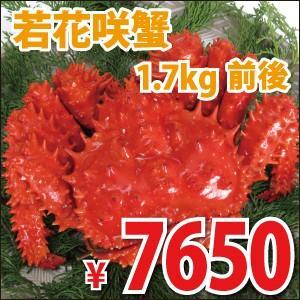 若花咲蟹(オス) 1.7kg前後 (かに カニ 蟹)|nemurokanisen