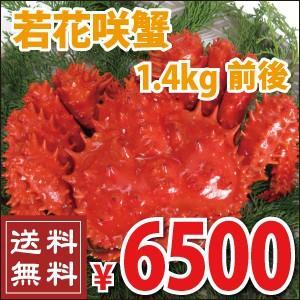若花咲蟹(オス) 1.4kg前後 (かに カニ 蟹)|nemurokanisen
