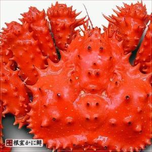 若花咲蟹(オス) 1.4kg前後 (かに カニ 蟹)|nemurokanisen|05