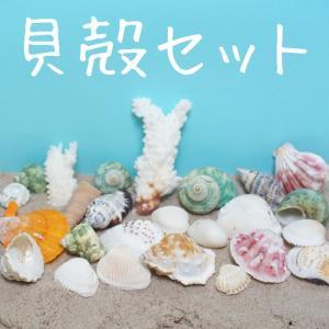 貝殻セットハンドクラフト用 130g色々な貝殻がセットになっています。 手芸 ビーズハンドクラフト 夏休みの工作 アクセサリー手作りレジンパーツ レジン封入用|neocolle
