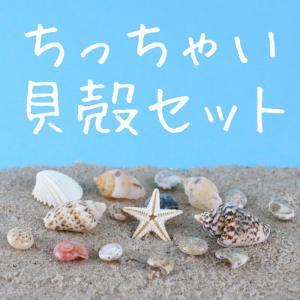 小さい貝殻とヒトデのセット ケース入り 小さい貝はネイルに 大き目の貝はレジン封入に 本物の貝殻 シェルーパーツ レジンパーツ ネイルパーツ|neocolle