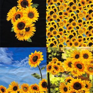 生地 布 【コットン】ひまわり日和(sunflower)カットクロスUSAコットン 花柄 ひまわり フラワー 生地 手作り ハンドメイド 布|nesshome