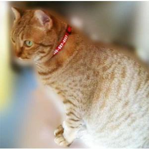 猫(ねこ)ちゃん用迷子札にもなる26カラーカラー netpetshal 04
