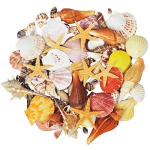 15種類混合海洋砂浜貝殻、天然カラー貝殻ヒトデ花瓶填料ビーチパーティー装飾、100個|netshop-ito