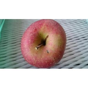 訳あり サンふじ 福島産 りんご 1箱 約10kg 家庭用 送料無料|netsu-kajyu|04