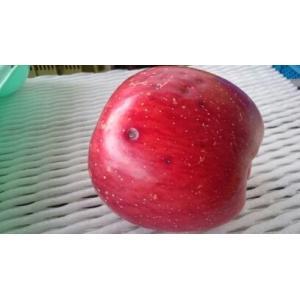 訳あり サンふじ 福島産 りんご 1箱 約10kg 家庭用 送料無料|netsu-kajyu|05