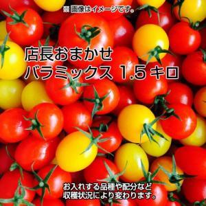 ミニトマト トマト 当店一番人気!数種類のミニトマトが入った店長おまかせバラミックス1.5キロ