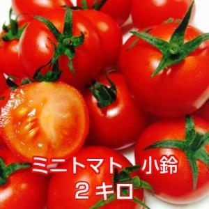 販売終了 トマト ミニトマト・小鈴 バラ2キロ 小粒がおいしい 旨味が濃いミニトマト  |next-triange