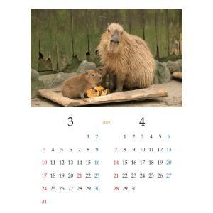 【ネコポス可】カピバラカレンダー ngsbiopark-amigos 02