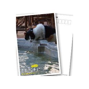 岩合光昭の世界ネコ歩き イスタンブール ブルーレイ 【NHK DVD公式】|nhkgoods|02