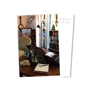 岩合光昭の世界ネコ歩き フロリダ・キーウエスト ブルーレイ 【NHK DVD公式】|nhkgoods|02