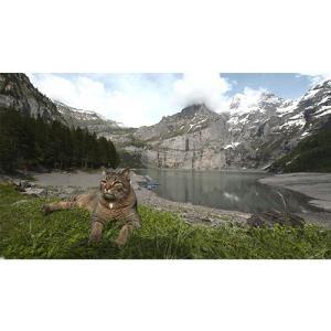 岩合光昭の世界ネコ歩き スイス DVD【NHK DVD公式】|nhkgoods|02