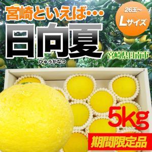 日向夏5kg Lサイズ 約26玉 宮崎県日南市直送|nichinan-tv