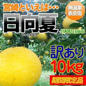 訳あり日向夏 10kg 宮崎県日南市より直送 nichinan-tv