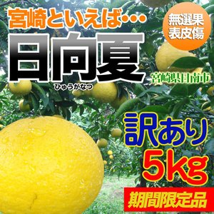 訳あり日向夏 5kg 宮崎県日南市より直送 nichinan-tv