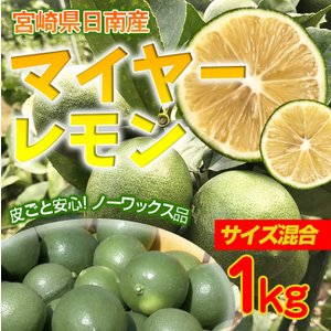 国産マイヤーレモン 1kg(宮崎県日南市)ノーワックス 無選果 枝付き発送可