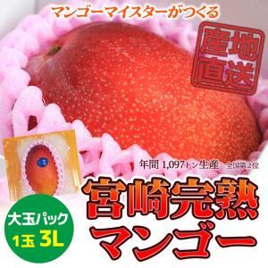 6月発送 宮崎完熟マンゴー 日南市マンゴー町 マンゴーマイスターがつくる 家庭用 大玉3Lサイズ 1個入パック|nichinan-tv