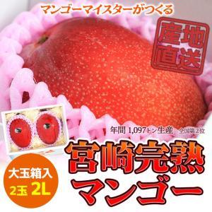 ご贈答用 6月発送 宮崎完熟マンゴー 日南市マンゴー町 マンゴーマイスターがつくる 大玉2Lサイズ 2個入|nichinan-tv