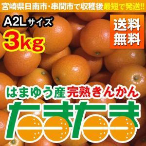 1月下旬発送 完熟きんかん たまたま 3kg A2Lサイズ 宮崎県日南市・串間市産(送料無料) nichinan-tv