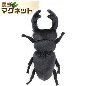 ☆ 昆虫マグネット オオクワガタ SB004|nico-marche