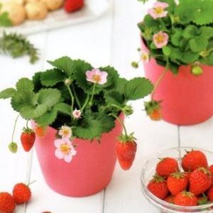 ハート型のポットで育てる可愛いストロベリーの栽培セット  母の日や誕生日プレゼント、バレンタインやホ...