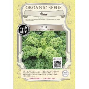 有機種子 固定種 ケール カーリータイプ 種 種子の画像