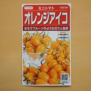 ミニトマト 種 オレンジアイコ サカタ交配 サカタのタネ