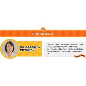 【お得なセット】 ポケモンパッド ピカッとアカデミー + ACアダプターTYPE5U nigiwaishouten 18