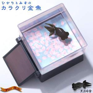 ひかりとみずのカラクリ金魚 黒出目金|nigiwaishouten