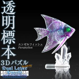 3Dパズル『DualLayerPuzzle 透明標本パズル (エンゼルフィッシュ)』|nigiwaishouten