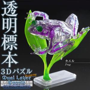 3Dパズル『DualLayerPuzzle 透明標本パズル (カエル)』|nigiwaishouten