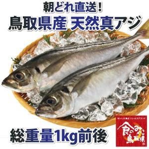 鳥取県産 天然アジ1kg詰め|nihonkai-ichiba