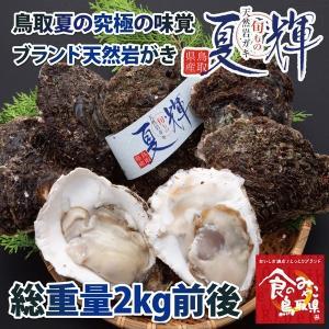 鳥取県産 ブランド天然岩がき 夏輝 約2kg詰め (岩ガキ/岩牡蠣/カキ) 6月初旬から中旬頃より順次発送|nihonkai-ichiba