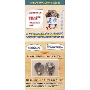 鳥取県産 ブランド天然岩がき 夏輝 約2kg詰め (岩ガキ/岩牡蠣/カキ) 6月初旬から中旬頃より順次発送|nihonkai-ichiba|03