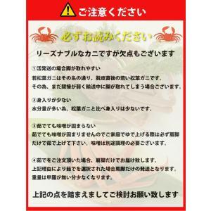 リーズナブルでお求めやすい!鳥取県産 訳あり若松葉ガニ1.2kg前後(1枚600g前後×2枚) 活と茹でをお選び頂けます(かに/カニ/蟹)|nihonkai-ichiba|05