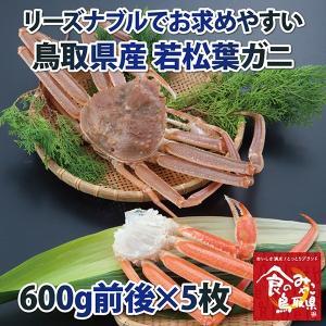 リーズナブルでお求めやすい!鳥取県産 訳あり若松葉ガニ3kg前後(1枚600g前後×5枚) 活と茹でをお選び頂けます(かに/カニ/蟹) nihonkai-ichiba