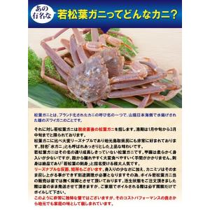 リーズナブルでお求めやすい!鳥取県産 訳あり若松葉ガニ3kg前後(1枚600g前後×5枚) 活と茹でをお選び頂けます(かに/カニ/蟹) nihonkai-ichiba 02