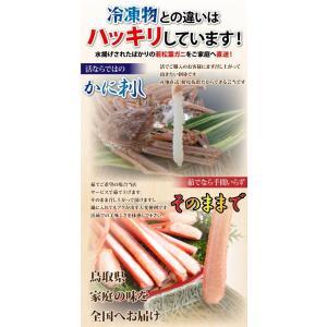 リーズナブルでお求めやすい!鳥取県産 訳あり若松葉ガニ3kg前後(1枚600g前後×5枚) 活と茹でをお選び頂けます(かに/カニ/蟹) nihonkai-ichiba 04
