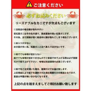 リーズナブルでお求めやすい!鳥取県産 訳あり若松葉ガニ3kg前後(1枚600g前後×5枚) 活と茹でをお選び頂けます(かに/カニ/蟹) nihonkai-ichiba 05