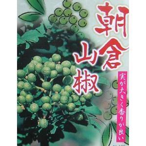 朝倉山椒(朝倉サンショウ) 5寸ポット植え:果樹苗 (実山椒) *樹形は様々です!