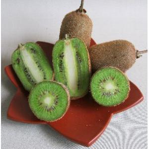 【1年生】 キウイフルーツ:ニューエメラルド(両性種):果樹苗 樹高20〜30センチ程度