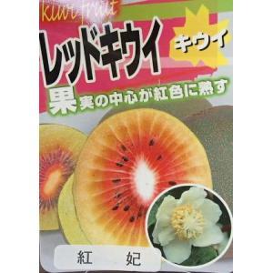 キウイフルーツ:紅妃 こうひ (メス木) 赤実キウイ :果樹苗