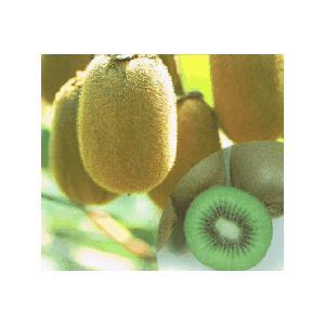 キウイフルーツ:ヘイワード(メス木):果樹苗