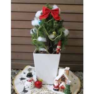 コニカ (カナダトウヒ) *5寸鉢植え   ♪可愛いクリスマスツリーにいかが?