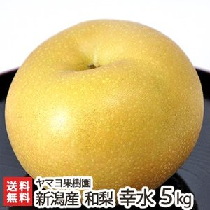 新潟県産 梨 幸水 5kg(10〜16玉) ヤマヨ果樹園/お歳暮に!/のし無料/送料無料|niigata-shop
