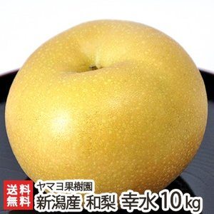 新潟県産 梨 幸水 10kg(20〜32玉) ヤマヨ果樹園/お歳暮に!/のし無料/送料無料|niigata-shop
