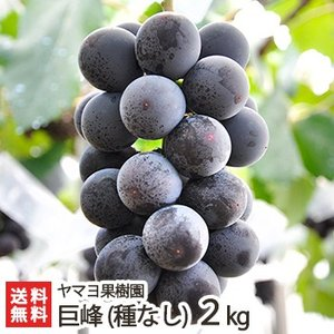 新潟県産 種なし巨峰 2kg(4〜6房) ヤマヨ果樹園/新潟産 ぶどう ブドウ 葡萄/送料無料|niigata-shop