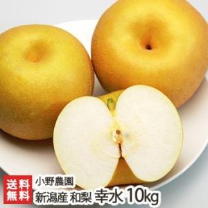 新潟県産 日本梨 幸水 10kg(12〜26個位) 小野農園/お歳暮に!/のし無料/送料無料|niigata-shop