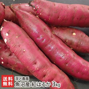 【送料無料】魚沼産 低温熟成さつまいも 紅はるか 通常サイズ 3kg 深沢農園 サツマイモ/薩摩芋/焼き芋/のし(熨斗)無料/お祝い/贈り物/お歳暮にも!